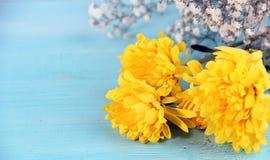 Gele bloemen blauwe achtergrond Stock Foto