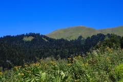 Gele bloemen bos en alpiene weiden in de bergen Abchazië van de Kaukasus royalty-vrije stock afbeeldingen