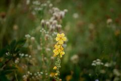 Gele bloemen De bloeiende lente Adem van de lente stock afbeeldingen