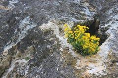 Gele bloemen in de klip Royalty-vrije Stock Foto