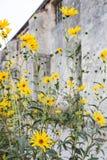 Gele bloemen in de Provence stock foto