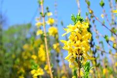 Gele bloemen in de tuin stock foto