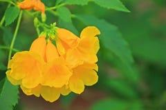 Gele bloemen in de tuin Stock Afbeeldingen