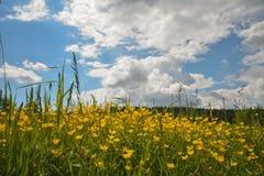 Gele bloemen in de weide met wolken als achtergrond Royalty-vrije Stock Foto's