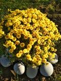 Gele bloemen in de zon Royalty-vrije Stock Fotografie