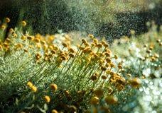 Gele bloemen in de zonneschijn Royalty-vrije Stock Afbeelding
