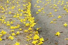 Gele bloemen door de wegkant Stock Afbeeldingen