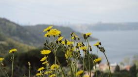 Gele bloemen en bijen stock videobeelden