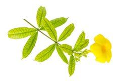 Gele bloemen en bladeren Royalty-vrije Stock Fotografie