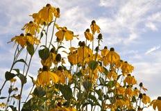 Gele bloemen en blauwe hemel Stock Foto's