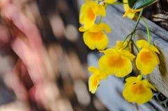 Gele bloemen en boompotten met bokehachtergrond royalty-vrije stock fotografie