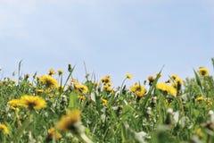 Gele bloemen en hemel stock afbeeldingen