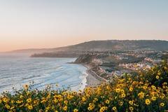Gele bloemen en mening van Bundelstrand van Dana Point Headlands Conservation Area, in Dana Point, Oranje Provincie, Californië royalty-vrije stock foto