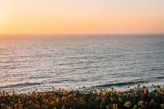 Gele bloemen en mening van de Vreedzame Oceaan bij zonsondergang, bij Dana Point Headlands Conservation Area, in Dana Point, Oran stock foto