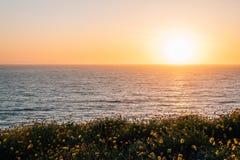 Gele bloemen en mening van de Vreedzame Oceaan bij zonsondergang, bij Dana Point Headlands Conservation Area, in Dana Point, Oran royalty-vrije stock foto's