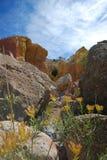 Gele Bloemen in Gele Geschilderde Rotsen Stock Foto
