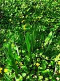 Gele bloemen, gouden bloem, bloementapijt Stock Foto's