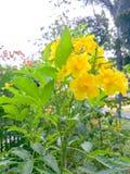Gele bloemen, groene bladeren en mooi licht royalty-vrije stock afbeelding