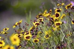 Gele bloemen i Stock Foto