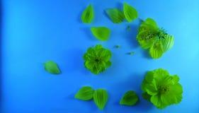 Gele bloemen op blauwe geweven achtergrond 3 stock afbeeldingen