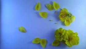 Gele bloemen op blauwe geweven achtergrond 2 stock foto's