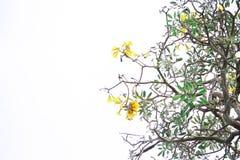 Gele bloemen op de achtergrond Stock Afbeeldingen