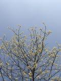 Gele bloemen op de boomstam onder de blauwe hemel stock foto's