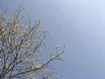 Gele bloemen op de boomstam onder de blauwe hemel stock afbeeldingen