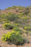 Gele bloemen op de heuvel royalty-vrije stock afbeelding