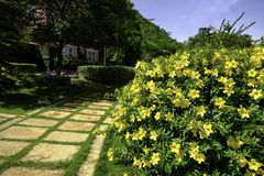 Gele bloemen op de manier Stock Fotografie