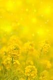 Gele bloemen op een bokehachtergrond Royalty-vrije Stock Foto's