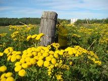 Gele bloemen op een gebied in Algoma stock afbeeldingen