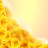 Gele bloemen op een gekleurde achtergrond Stock Fotografie