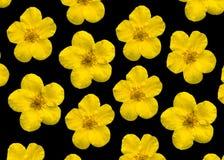 Gele bloemen op een zwarte Stock Afbeelding