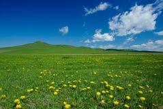 Gele bloemen op gebied Royalty-vrije Stock Afbeelding