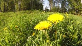 Gele bloemen op zonnige dagbeweging stock footage