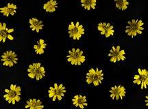 Gele bloemen op zwarte achtergrond stock foto's