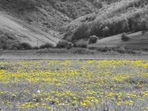 Gele bloemen, over grijze omgeving Royalty-vrije Stock Afbeelding
