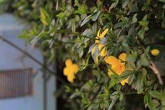 Gele bloemen over stedelijk voorwerp stock afbeeldingen