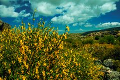 Gele bloemen over struiken en rotsen stock afbeeldingen