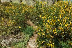 Gele bloemen over struiken en rotsen stock fotografie