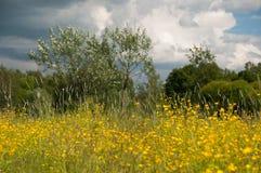 Gele bloemen in stadspark Royalty-vrije Stock Afbeelding