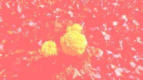Gele bloemen tegen de achtergrond van kleur een het leven koraal stock afbeeldingen