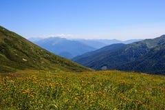Gele bloemen van alpiene weiden in de de bergenvallei van de Kaukasus stock foto