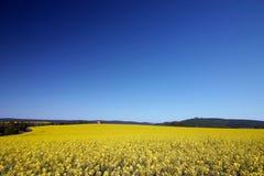 Gele bloemen van cole zaad Royalty-vrije Stock Fotografie
