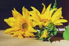 Gele bloemen van een zonnebloemclose-up Mooie achtergrond royalty-vrije stock fotografie