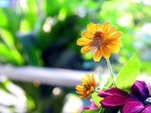 Gele bloemen voor tuin stock foto's