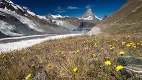 Gele bloemen in weide met bergen in afstand royalty-vrije stock afbeelding
