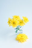 Gele bloemenchrysanten in een glas op een witte achtergrond stock fotografie