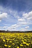 Gele bloemenclose-up stock afbeeldingen